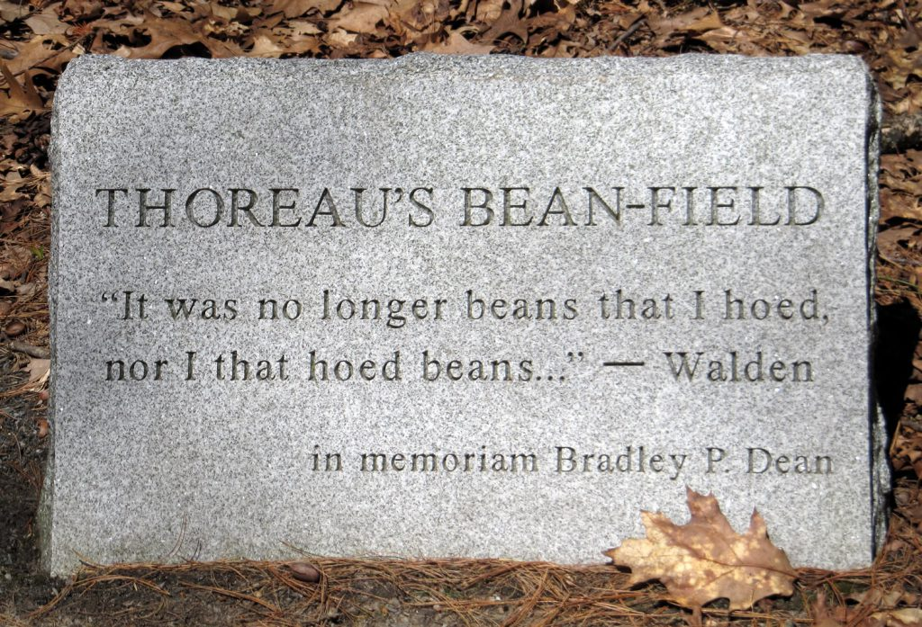 Thoreau's Beanfield Stone